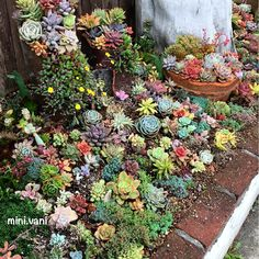60 DIY Succulent Ball Sphere Planter Instruction These trendy Succulents ideas would gain you amazing compliments. Check out our gallery for more ideas these are trendy this year. Garden Paving, Garden Planters, Garden Beds, Succulents In Containers, Planting Succulents, Planting Flowers, Flower Seeds, Flower Pots, Cottage Garden Design