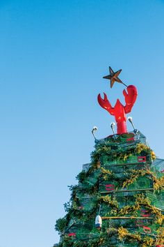 Mainers have developed quite a knack for building huge Yuletide trees — out of lobster traps, of course. Want to be awestruck this year? Here's where to go.