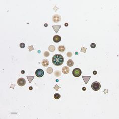 We are all in this together. - Synaptic Stimuli / California Academy of Sciences Geology Diatom Collection / Sacred Geometry <3