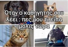 Αυτό το λέω συνέχεια σε όλους. Greek Memes, Funny Greek Quotes, Funny Qoutes, Stupid Funny Memes, Hilarious, Funny Images, Funny Photos, How To Be Likeable, Have A Laugh