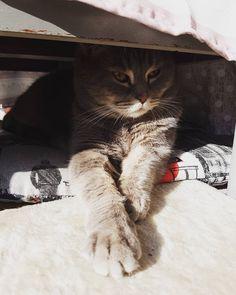 #catsoginstagram#gattidiinstagram#mirmo#cats#cat#gatto#gatti#neko#chat#love#amore