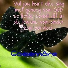 Afrikaanse Quotes, Goeie More, Special Quotes, Pretty Birds, Cocktail Recipes, Bible Verses, Night, Beautiful Birds, Scripture Verses