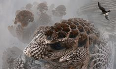 first_year_of_the_mandelbulb_by_mandelwerk-d34qktx.jpg (1600×960)
