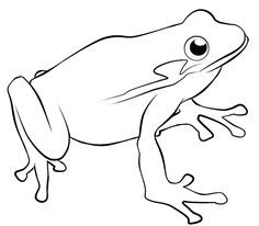 Learn How To Draw A Tomato Frog Amphibians Step By Step