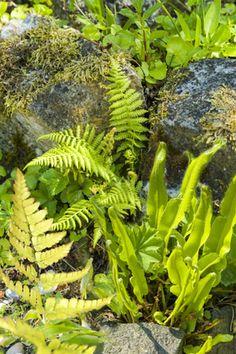 Bregner Fern, Plants, Ferns, Flora, Plant, Planting