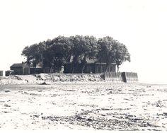 Schokland: vanaf de drooggevallen grond een opname van de Middelbuurt met kerkje en bomen, 1942  Fotocollectie Nieuw Land, collectie Bazlen; K.A. Bazlen