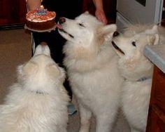 Natural Pet treats for healthy pets...birthday cake recipes