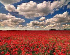 http://carlosalmo.blogspot.com.br/2011_07_01_archive.html Sorrio para você desde a sua entrada na vida... Sigo-lhe os passos e não o deixo senão nos mundos onde se realizam as promessas de felicidade, incessantemente murmuradas aos seus ouvidos. Sou sua fiel amiga. Não repila minhas inspirações... Eu sou a esperança.
