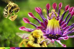 Das Märchen vom Bienchen und Blümchen