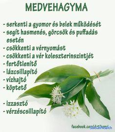 10003494_688733361169725_ Doterra, Herbs, Album, Humor, Health, Food, Bottles, Health Care, Humour
