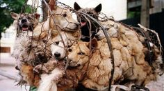 Petition · Speaker of the House: End the Dog Meat Trade - Vote on H. Res 752 · Change.org  https://www.change.org/p/speaker-of-the-house-end-the-dog-meat-trade-vote-on-h-res-752?recruiter=305307297&utm_source=share_petition&utm_medium=twitter&utm_campaign=share_twitter_responsive