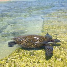 We hope to see all sort of marine life: turtles, dolphins, whales...
