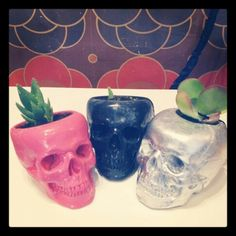 #black #pink and #silver #skull #planters with #succulents by @merrygoroundvintage $35 each #anatomical #anatomy #skull #human #homosapien #biology #science #nature #under #underyourskin #head #brain #capsule #house #protection #macabre #eyesockets #teeth #nostrils #cheekbones #bones #dead #plants #plantlife #watersaving #life