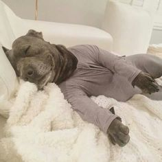 Pits in PJs are my favorite thing in the whole world.