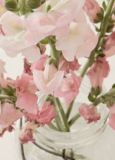 Snapdragons...one of my favs