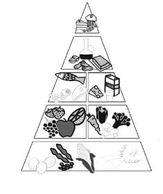 The Right Arrangement Of Food On The Pyramid Coloring Pages - Download & Print Online Coloring Pages for Free | Color Nimbus Online Coloring Pages, Food Pyramid, Colour Images, Free Coloring, Coloring Sheets, Kids, Children, Colouring Sheets, Boys