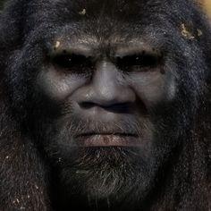 bigfoot-face-19