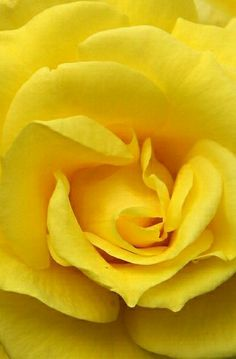 I wish you happiness, joy, love and peace ...and good friends by your side...so love yellow roses.
