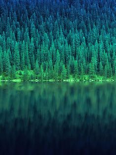 Pine trees & a lake. My latest obsession lately while living up in the mountains!