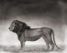 Nick Brandt's wildlife photography
