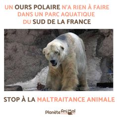 Comment porter plainte pour maltraitance animale - Trend Giving Love Quotes 2019 Equine Photography, Animal Photography, Hamster, Andalusian Horse, Summer Quotes, Trendy Tree, Animal Welfare, Animal Quotes, Polar Bear