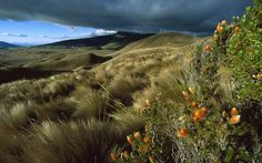 Natural-Scenery-Ecuador.jpg
