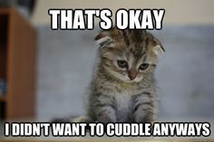 Oh noooo! My heart. Going to cuddle with my baby boy stat!!! 12 Very Sad Kittens That Never Quite Became A Meme