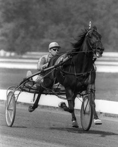 The sensational Albatross, one of the greatest harness horses of all time.  Albatross, out of an unproven mare, was sold with his dam and sister for $11,000.  No one expected much.  The determined Albatross went on to become a two-time Harness Horse of the Year and one of the great sires.  He set a record for a mile 1:54.4 at The Red Mile in Kentucky and later broke his own record at Sportsman's Park 1:54.3 in Chicago. He also set the single-season earnings record in 1971.