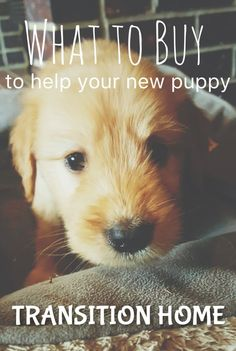 5 things to get to help your new pup transition home.  It can be a stressful change and these things can help!