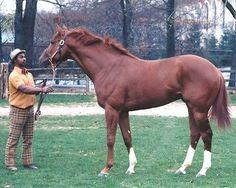 SECRETARIAT & EDDIE SWEAT - BEAUTIFUL 1972 BELMONT PARK ORIGINAL PHOTO!