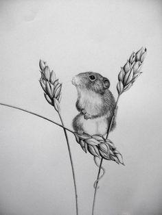 Little field mouse in pencil by ~30030610 on deviantART