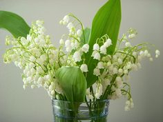 Lily of the Valley by tuija, via Flickr