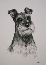 Miniature Schnauzer Terrier dog drawing Limited Edition fine art print H Irvine