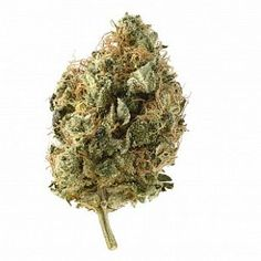Amsterdam Genetic Seeds has been developed by true industry experts who have more than 80 years combined knowledge of the cannabis industry. Education Information, Cannabis Growing, Growing Seeds, Genetics, Amsterdam, Herbs, Herb, Spice