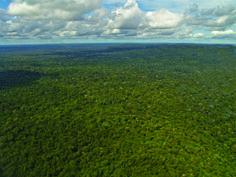 En el país, la información sobre el estado de la intervención de los ecosistemas es deficiente cuando la singularidad y la importancia de nuestros recursos naturales demandan, por el contrario, un cuidadoso seguimiento