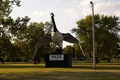 Maxie the World's Largest Goose, a roadside attraction in Sumner, Missouri.