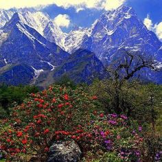 #Yumthang Valley of flowers #Sikkim India #Gangtok #pin #vallyofflowers #beautifulplaces