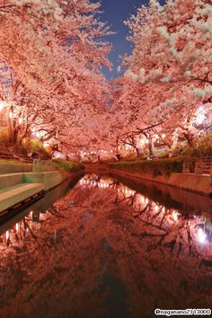 元荒川の夜桜、2015