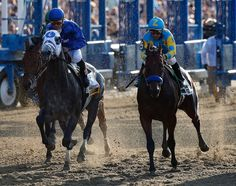 The American Thoroughbred was undefeated this year. The Triple Crown — awarded to the winner of the Kentucky Derby, Preakness Stakes, and Belmont Stakes — was last won by Affirmed in The Belmont Stakes, Preakness Stakes, Derby Horse, Triple Crown Winners, American Pharoah, Bull Riders, Racehorse, Thoroughbred, Horse Riding