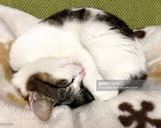 CAT Curled in a circle - Google Search