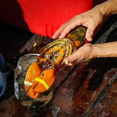How to kill lobster in a humane way Boiled Lobster Recipes, How To Cook Liver, Live Lobster, Grilled Lobster, Island Food, Professional Chef, Learn To Cook, Seafood, Grilling