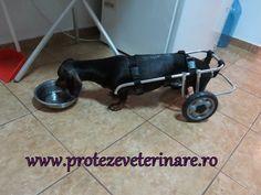proteze veterinare Home Appliances, Dogs, Animals, Doggies, House Appliances, Animales, Animaux, Pet Dogs, Appliances