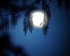 The Moon last night....