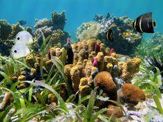 #Belize Les fonds marins du Belize en Amérique Centrale sont d'une rare diversité. Bien qu'il soit nécessaire d'être accompagné d'un guide pour observer les espèces les plus rares, vous pourrez observer une large palette d'espèces par vous-même.   Dans le Cockscomb Basin Wildlife Sanctuary vous attentent requins et raies pastenagues ainsi que des espèces terrestres telles que le Jaguar ou le cochon d'Inde géant ! http://vp.etr.im/a0d4