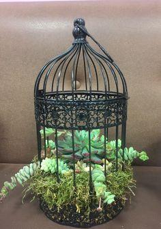 Succulents in a mini birdcage