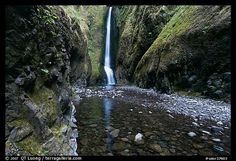 Oneonta Gorge in Oregon. Must remember this when I get to visit Multnomah Falls!!