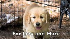 Canine Assistants You Tube Channel. http://bit.ly/caninevideo