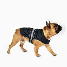 Dogs, Clothing, Animals, Black, Outfits, Animales, Animaux, Black People, Pet Dogs