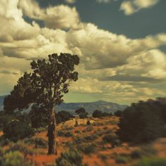 Another #Lensbaby Landscape of the #CedarCity region known as #ThreePeaks. Most landscape photographers follow a rule that everything near & far has to be in focus with a very wide depth of field; rules were made to be broken in my book where anything  can go in the name of art. #clouds #summer #m43 #sage #desert #bokeh #Sweet35Optic #america #utahgram #801people #tbirdnation #igotodixie #southernutah #countrylife #countryboy #juniper #cloudporn #july