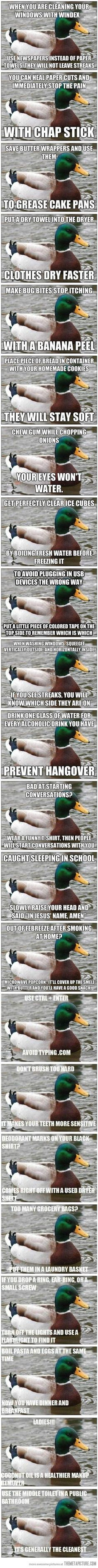 What a helpful duck. Good to know household tips. Always get good tips from ducks. Things To Know, Good Things, Creative Things, Creative Ideas, Diy Things, Life Hacks, Daily Hacks, Mom Hacks, Life Tips